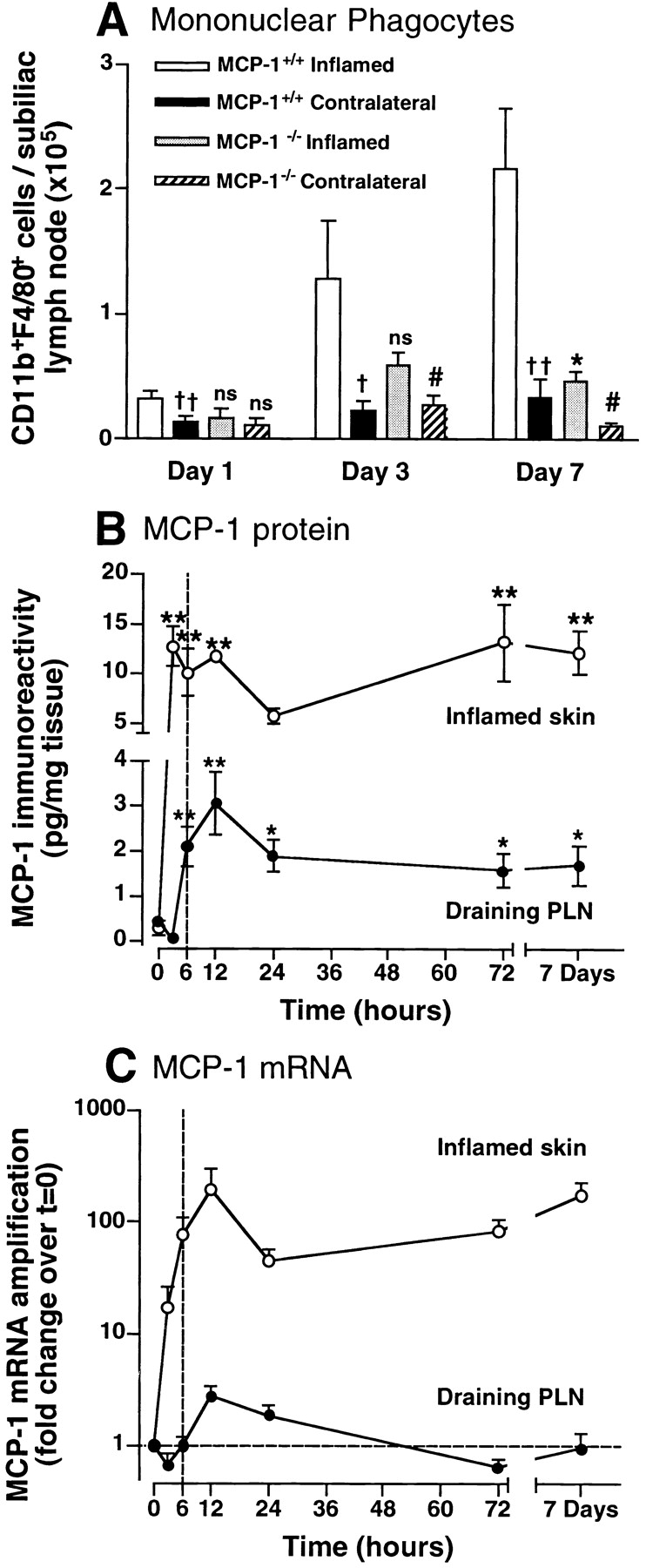 Rapid, sustained induction of MCP-1 in inflamed skin precipitates monocyte/macrophage accumulation in draining PLNs. (A) Time course of monocyte/macrophage recruitment to PLNs of wild-type and MCP-1 −/ − mice. CD11b + F4/80 + leukocytes were counted in subiliac PLNs at different times after intracutaneous injection of CFA/KLH into the ipsilateral flank. Monocyte numbers in the contralateral, noninflamed subiliac PLNs are shown for comparison. † P