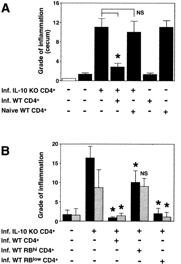 CD45RB low CD4 + cells from H. hepaticus –infected WT mice protect RAG KO animals from colitis induced by IL-10 KO CD4 + cells plus bacterial infection. (A) H. hepaticus –infected RAG KO mice (solid bars) were inoculated with CD4 + cells from infected IL-10 KO mice and CD4 + cells from naive or infected WT mice as indicated (4 × 10 5 of each population). Intestinal pathology was analyzed 4 wk later. Naive (open bar) and infected RAG KO animals receiving no cells were included as controls. Bars represent mean histology scores ± SD of three mice per group except for groups receiving WT cells alone, in which case, due to limited cell numbers, only two mice per group were used. Similar results were seen in ascending colon (although histology scores were lower) and when disease was induced by the transfer of CD4 + cells from naive IL-10 KO mice (not depicted). (B) Infected RAG KO mice were given either no cells or CD4 + cells from infected IL-10 KO mice and CD4 + , CD45RB hi CD4 + , or CD45RB low CD4 + cells from infected WT mice as indicated (4 × 10 5 of each population). Pathology in the cecum (solid bars) and ascending colon (gray bars) were analyzed 4 wk later. Bars represent mean histology scores ± SD of six or seven mice per group pooled from two separate experiments except for the group receiving IL-10 KO CD4 + cells plus infected WT CD4 + cells ( n = 3), which was included in only one of the experiments. Statistical significance was tested for groups receiving IL-10 KO cells. *, P