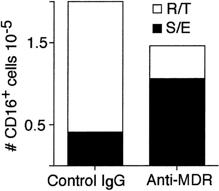 Effect of a reverse transmigration antagonist on the distribution of CD16 + cells in endothelial cell cultures. PBMCs were incubated with endothelial/collagen cultures for 1.5 h, then washed to remove nonadherent, nonmigrated cells. Cultures were fed with medium containing mAb to MDR-1 or isotype-matched control mAb UPC10, and incubation was continued for 48 h to allow reverse transmigration. The presence of CD16 + cells in reverse-transmigrated and subendothelial leukocytes was monitored after 48 h by flow cytometry. The total number of CD16 + cells recovered from cultures in the presence and absence of anti-MDR-1 is shown. The fraction of such cells that had reverse transmigrated (R/T) is shown by the open portion of the bars, whereas the fraction that remained in the subendothelium (S/E) is shown by the filled portion of the bars.