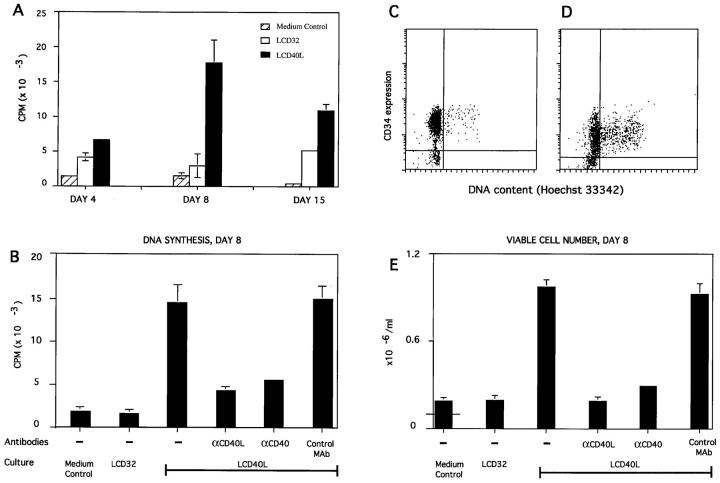 CD40 ligation induces proliferation of human CD34 + progenitor cells. ( A ) Kinetics, ( B , E ) specificity, ( C , D ) cell cycle analysis. CD34HPC cultured as described in Materials and Methods were either pulsed overnight with 1 μCi of [ 3 H]thymidine ( A , B ) or counted by Trypan blue exclusion ( E ). Experiments shown are representative of three experiments and data are presented as mean cpm ± SD ( A and B ) and cell numbers per ml ± SD ( E ), as determined in triplicate wells. For quantitating recovery of viable cells, 10 5 progenitor cells (indicated by horizontal line in medium control bar) were seeded in 1.0 ml of culture medium onto 10 5 CD40L + cells or control CD32 cells. Results were evaluated at days 4, 8, and 15 ( A ) or at day 8 only ( B , E ). Where indicated, cultures were supplemented with mAbs to CD40 (mAb 89), CD40L (mAb LL48), or isotype-matched control antibodies. ( C , D ) Cell cycle analysis. CD34HPC freshly isolated (data not shown) or cultured either on CD32L ( C ) or CD40L-transfected fibroblasts ( D ) for 3 d were resuspended and incubated with Hoechst 33342. To quantitate specifically CD34HPC entering into cycle, Hoechst-stained cells were subsequently labeled with a mAb to CD34, washed, and analyzed with a FACSTAR +® flow cytometer.