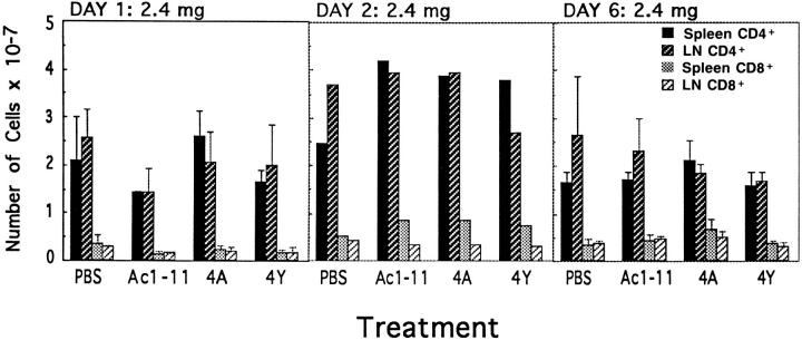 No net change in the numbers of CD4 + T cells in the periphery is observed after peptide injection. The numbers of CD4 + and CD8 + cells from lymph nodes and spleen from TCR transgenic mice injected with PBS, Ac1-11, Ac1-11[4A], or Ac1-11[4Y] are shown 1, 2, and 6 d after a single administration of 2.4 mg of peptide. Black bars represent the numbers of CD4 + T cells in the spleen, dark cross-hatched bars represent the numbers of CD4 + T cells in lymph nodes, shaded bars represent the numbers of CD8 + T cells in the spleen, and light cross-hatched bars represent the numbers of CD8 + T cells in the lymph nodes. Results are pooled from three experiments for days 1 and 6, and two experiments for day 2. In one experiment from day 3, CD4 + T cells had increased in number by 1.5–2-fold in peptide-injected mice (data not shown).