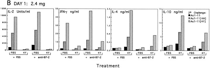 The effect of anti–B7-2 on the in vivo expression of B7-1 and B7-2 and the development of Th2 responses in vivo after injection of Ac111[4Y]. TCR transgenic mice were injected intraperitoneally with either PBS or 100 μg of anti–B7-2 antibody GL-1 on days −1 and 0. On day 0, mice were injected intravenously with either PBS or 2.4 mg of Ac1-11[4Y], and mice were killed on day 1. ( A ) The expression of B7-1 and B7-2 on B cells and macrophages was determined as described in Materials and Methods. Solid lines, expression of B7-1 or B7-2 on cells from mice injected intravenously with PBS; dashed lines, expression on cells from mice injected with Ac1-11[4Y]. B7-1 was upregulated on macrophages from Ac1-11[4Y]– injected mice treated intraperitoneally with either PBS or anti–B7-2, while B7-2 was upregulated on B cells from Ac1-11[4Y]–injected mice given PBS intraperitoneally, but not on cells from Ac1-11[4Y]–injected mice given anti–B7-2 intraperitoneally. ( B ). The cytokine profile of splenocytes in response to 10 μM Ac1-11, Ac1-11[4A], or Ac1-11[4Y] was determined by ELISA as described. Black bars, cytokine response to Ac1-11 in secondary challenge; shaded bars, cytokine response to Ac1-11[4A] in secondary challenge; cross-hatched bars, cytokine response to Ac1-11[4Y] in secondary challenge. IL-2 production was similar between mice given PBS or Ac1-11[4Y] intravenously, regardless of antibody treatment. IFN-γ production was increased approximately twofold in mice given both Ac1-11[4Y] and anti–B7-2 over that of cells from mice given only Ac1-11[4Y], while IL-4 and IL-10 production by cells from mice given both Ac1-11[4Y] and anti–B7-2 was reduced by about two- to fourfold relative to production by cells from mice given Ac111[4Y] only.