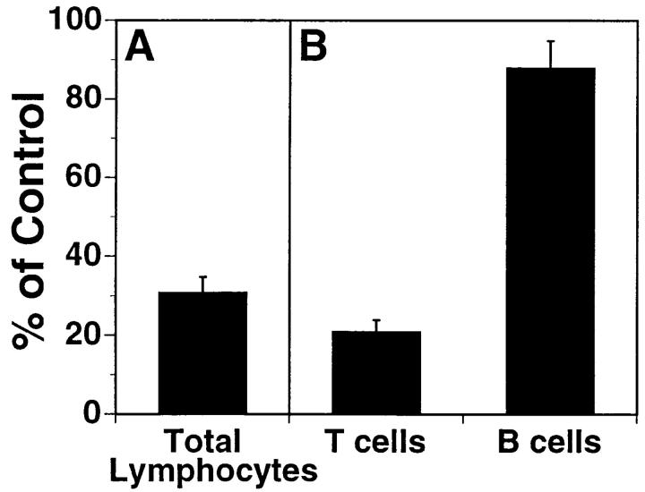 mAb L11 inhibits T cell binding to HEV in vitro. ( A ) L11 blocks binding of total LN lymphocytes to PLN HEV in modified Stamper-Woodruff frozen section assays performed using isolated BALB/c PLN and MLN lymphocytes mixed 1:1 with TRITC-labeled rat MLN cells (internal standard cells not recognized by L11). Cells were preincubated with isotype-matched control mAb or with L11, added to freshly cut PLN frozen sections, and incubated for 30 min with constant rotation (76 rpm) at 4°C. The number of mouse and rat lymphocytes bound to > 30 HEV on each of quadruplicate sections was determined by fluorescence microscopy. The ratio of the number of L11-treated cells bound/rat internal standard to the number of control antibody treated cells bound/rat internal standard was calculated and sample cell binding expressed as percent of control cell binding. ( B ) Blocking of T versus B cells was assessed as described for total lymphocytes using T cells isolated by negative selection ( > 97% Thy 1 + ). B cells were identified in mixed populations by prestaining cell suspensions with FITC-conjugated antiB220.