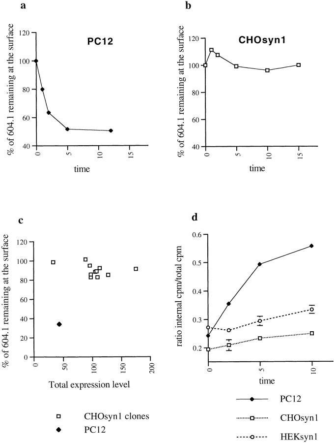 Comparison of synaptotagmin 1 internalization in CHO and PC12 cells. (a) wtPC12 or (b) CHO stably transfected with synaptotagmin 1 (CHOsyn1) were labeled at 4°C with the 604.1 antibody and then moved to 37°C for the indicated periods. Cells were cooled to 4°C and antibody remaining at the surface after the 37°C incubation was detected with a fluorescein-conjugated secondary antibody. The intensity of fluorescence was determined by flow cytometry. Data were expressed as the percentage of the initial value at t = 0. (c) The expression level of synaptotagmin 1 in different CHOsyn1 clones was determined by flow cytometry after permeabilization of the cells and staining with 604-1 antibody. These values are expressed along the x-axis. The same clones were then analyzed for internalization of synaptotagmin 1 using the same assay as in panels a and b. The values obtained after 10 min at 37°C correspond to the y-axis. The same measurements were done in parallel on PC12 cells. (d) wt PC12, CHOsyn1, and HEK cells stably expressing synaptotagmin 1 (HEKsyn1) were examined for internalization of synaptotagmin 1 using 125 I -604.1 antibody. Cells were labeled at 4°C and shifted to 37°C for different time points. The internalized antibody was determined by surface acid stripping and expressed as a fraction of total cell associated counts. Each time point was done in triplicate. In this and subsequent figures, when standard deviations are not apparent, they were too small to be represented graphically.