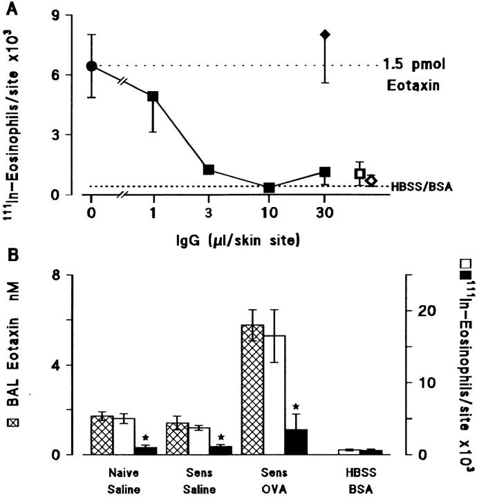 ( A ) Inhibition of eotaxin-induced 111 In-eosinophil accumulation by antieotaxin antibody. Purified eotaxin (1.5 pmol) was coinjected with antieotaxin IgG (▪, 1–30 μl), control IgG (♦, 30 μl) or without IgG (•, upper dotted line ) into the skin of naive guinea pigs that had received an i.v. injection of 111 In-eosinophils. Results are presented as a mean±SEM of 111 In-eosinophils/skin site after 4 h ( n = 4–6 bioassay animals). Responses to the intradermal vehicle (HBSS/0.25% BSA) alone are shown by the lower dotted line. Antieotaxin (□, 30 μl) or control IgG (⋄, 30 μl) added to the HBSS/BSA did not induce significant 111 In-eosinophil accumulation. ( B ) Inhibition of 111 In-eosinophil chemoattractant activity in 6 h BAL fluid by antieotaxin antibody. BAL fluid obtained 6 h after exposure of naive or sensitized guinea pigs to aerosolized saline or ovalbumin was concentrated by <t>C18</t> <t>SepPak</t> chromatography (see Materials and Methods) and coinjected with 50 μl control IgG ( open bars ) or antieotaxin IgG ( solid bars ) into the skin of naive guinea pigs which had received an i.v. injection of 111 In-eosinophils. Responses to HBSS/BSA + control IgG or antieotaxin antibodies were also determined. Results are presented as a mean±SEM ( n = 4 bioassay animals) and significant differences between control IgG and antieotaxin IgG treated samples are indicated as * P