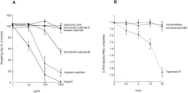 Effect of GAGs on P. falciparum rosetting. A shows disruption of rosettes exerted by different GAGs. FCR3S1.2 cultures were incubated with GAGs for 1 h at 37°C and compared to control culture. Results are the means and standard error of three separate experiments. B shows the effect of enzyme treatment of uninfected, C-FDA–labeled erythrocytes in a competitive assay of rosette reformation in the presence of normal erythrocytes and FCR3S1.2-infected pRBCs. Results are the means and standard error of three separate experiments, or two experiments for neuraminidase. Neuraminidase and chondroitinase ABC concentrations are in IU, whereas the heparinase III concentration is in Sigma units. (One Sigma unit corresponds to ∼1.7 × 10 −3 IU.)
