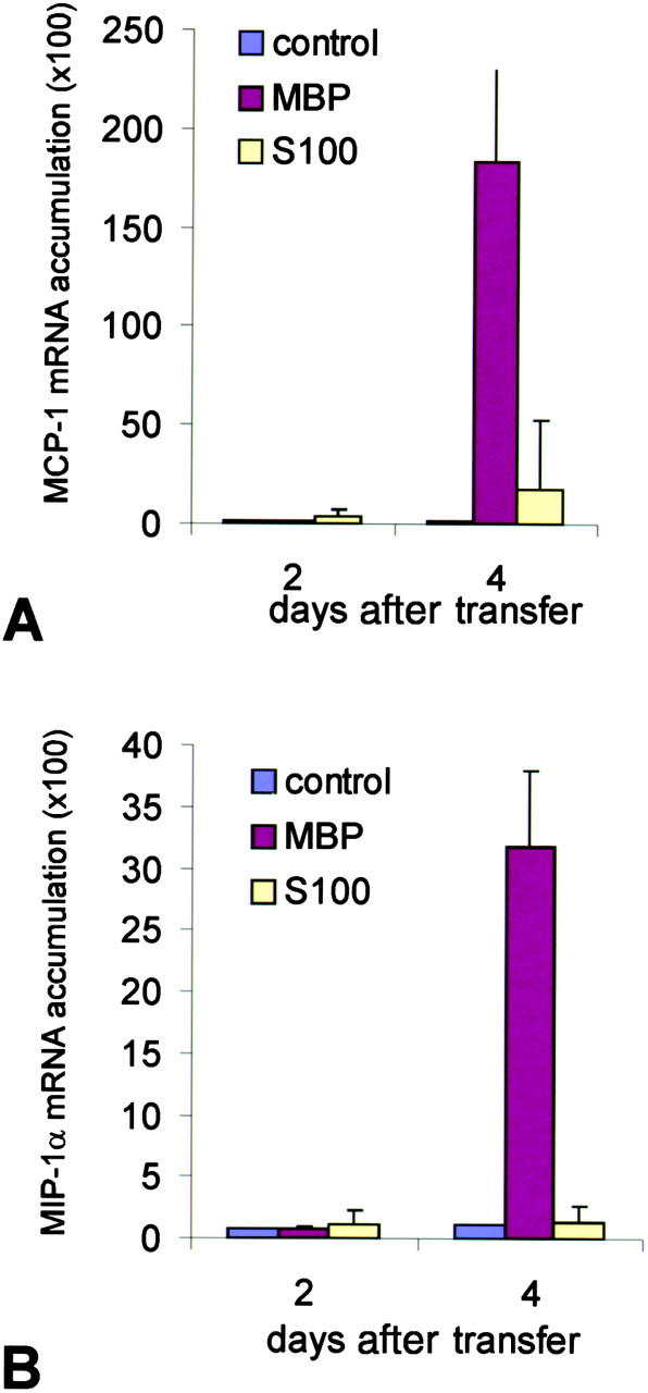 Quantitative chemokine mRNA expression in the CNS. The relative amount of mRNA transcripts for (A) <t>MCP-1</t> and (B) MIP-1α was analyzed from spinal cord tissue of MBP-EAE (MBP), S100β-EAE (S100), and control animals (control) by dot blot hybridization at days 2 and 4 after transfer. Note the massive up-regulation of MCP-1 and MIP-1α mRNA in the CNS of T MBP cell–treated, but not in the T S100β cell–treated, animals. Amplification of β-tubulin and analysis on ethidium bromide–stained agarose gels demonstrated intact RNA in all samples (not depicted). The data were confirmed in a second set of independently prepared samples.