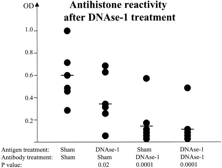 """Nuclear antigenic bridges facilitate histone binding by anti-DNA Abs. Six representative anti-dsDNA/antihistone dual-binding Abs were subjected to DNase-I or sham treatment as detailed in Materials and Methods. Likewise, the histone substrate (i.e., """"Antigen"""") was also subjected to DNase-I or sham treatment. All Abs were tested for histone reactivity within the same ELISA plates. Horizontal bars represent the mean histone reactivity within each treatment group. The depicted p-values represent the result of comparing each group with the sham-treated (Ab and Ag) control. All DNase-I–treated Abs retained dsDNA-binding after treatment (not depicted)."""