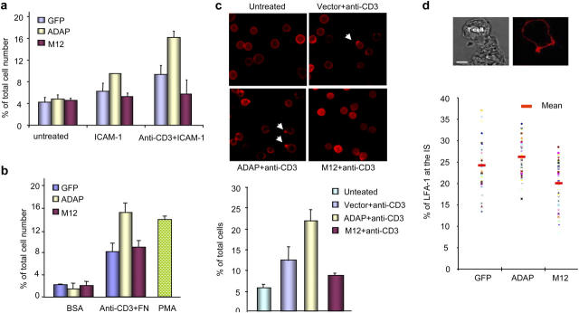 ADAP–SLP-76 binding regulates integrin adhesion and clustering. GFP, ADAP-GFP, and M12-GFP–infected T8.1 cells were unstimulated or stimulated with 2C11 or PMA for 30 min and incubated on BSA, ICAM-1Fc–coated plates (a) or fibronectin (FN)-coated plates (b). (c) GFP, ADAP-GFP, and M12-GFP–infected T8.1 cells were stimulated with 2C11 for 30 min, fixed, and stained with anti-CD11a and Alexa Fluor 546–conjugated anti–rat antibody. Anti–LFA-1 capping was defined by the presence of a discrete polarized cap at one end of the cell. (bottom) Histogram showing the percentage of T8.1 cells with LFA-1 clustering. (d) GFP, ADAP-GFP, and M12-GFP–infected T8.1 cells were cocultured with Ttox pulsed L625.7 cells for 30 min, fixed, and stained for LFA-1 as before. Imaging and measurements of staining at the immunological synapse amongst individual conjugates ( > 45) were performed by laser-scanning microscopy. (top) DIC image (left) showed the conjugate and fluorescence image (right) showed LFA-1 clustering at the interface between T8.1 and L625.7 cells. (bottom) Histogram showed the percentage of LFA-1 at the interface relative to the total surface LFA-1.