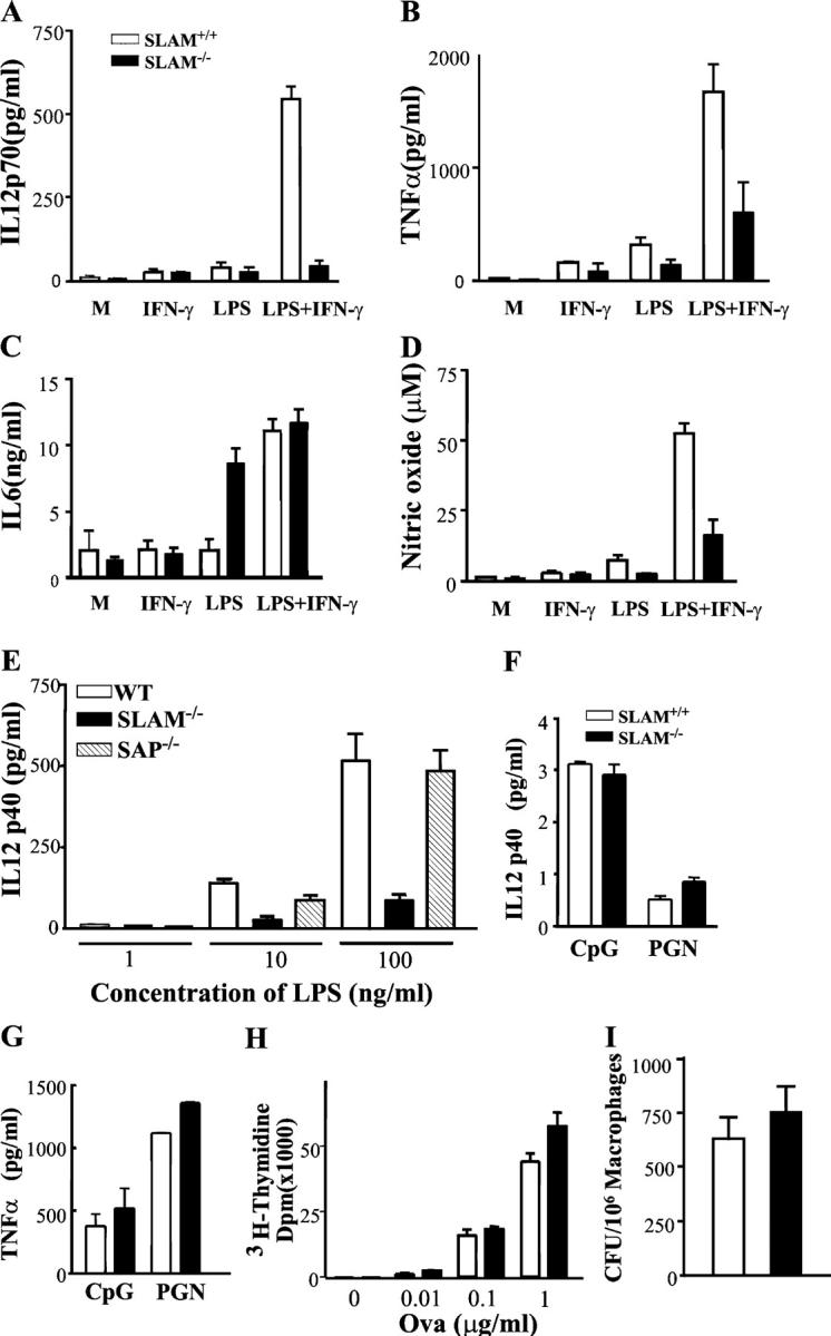 Altered IL-12, TNF-α, IL-6, and NO production by peritoneal macrophages from SLAM −/− C57BL/6 mice. (A) IL-12 production by SLAM −/− C57BL/6 or WT SLAM +/+ C57BL/6 peritoneal macrophages. Resting peritoneal macrophages from 12 SLAM −/− C57BL/6 or WT SLAM +/+ C57BL/6 mice were stimulated with 200 U/ml IFN-γ, 2 ng/ml LPS, or with IFN-γ plus LPS for 24 h. IL-12p70 was determined by ELISA as described in Materials and Methods. M, cells incubated in medium only. (B) TNF-α production by SLAM −/− C57BL/6 or WT SLAM +/+ C57BL/6 peritoneal macrophages. Resting peritoneal macrophages from SLAM −/− C57BL/6 or WT SLAM +/+ C57BL/6 mice were stimulated as described in A. TNF-α was determined by ELISA in the same culture supernatants as described in Materials and Methods. M, cells incubated in medium only. (C) IL-6 production by SLAM −/− C57BL/6 or WT SLAM +/+ C57BL/6 peritoneal macrophages. Resting peritoneal macrophages from SLAM −/− C57BL/6 or WT SLAM +/+ C57BL/6 mice were stimulated as described in A. IL-6 was determined by ELISA in the same culture supernatants as described in Materials and Methods. M, cells incubated in medium only. (D) NO production by SLAM −/− C57BL/6 or WT SLAM +/+ C57BL/6 peritoneal macrophages. Resting peritoneal macrophages from SLAM −/− C57BL/6 or WT SLAM +/+ C57BL/6 mice were stimulated as described in A. NO was determined in the same culture supernatants as described in Materials and Methods. M, cells incubated in medium only. (E) IL-12p40 production is impaired in thioglycollate-induced peritoneal macrophages from SLAM −/− C57BL/6 mice, but not from SAP −/− C57BL/6 mice. Thioglycollate-elicited macrophages were isolated from the peritoneal cavity of SLAM −/− , SAP −/− , or WT SLAM +/+ C57BL/6 mice. 2 × 10 6 macrophages were activated with increasing amounts of LPS (at 1, 10, or 100 ng/ml). Supernatants were collected after 24 h and IL-12p40 was determined by ELISA. (F) IL-12p40 production by macrophages in response to CpG and PGN. Thioglycollate-el