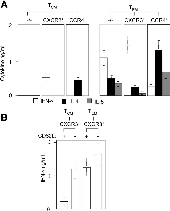 Ex vivo cytokine-producing capacities of CD4 + memory T cell subsets. (A) Purified CD4 + T CM and T EM cell subsets were stimulated with PdBu and ionomycin for 24 h and supernatants were analyzed for IFN-γ (diluted 1:4, white bars), IL-4 (black bars), and IL-5 (gray bars) by ELISA. Stimulation with anti-CD3 and anti-CD28 antibodies gave similar results (not depicted). Shown is the mean of four experiments with cells from different donors. (B) CXCR3 + CD4 + T cells were sorted for CCR7 and CD62L expression as indicated and IFN-γ production was assessed as described above. The mean of three independent experiments with three different donors is shown.
