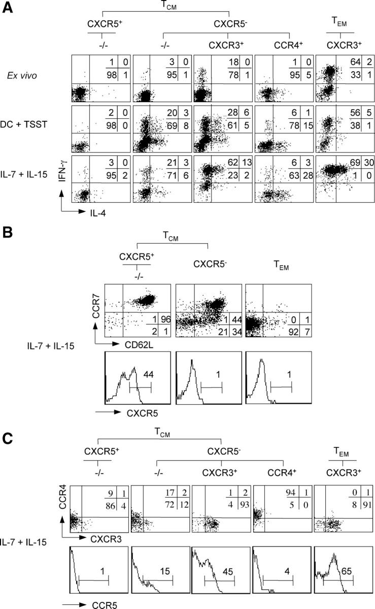 (A) Differentiation of T CM cell subsets in response to TCR or cytokine stimulation. Purified CD4 + T cell subsets were CFSE labeled and stimulated with TSST-loaded DCs or with IL-7 and IL-15 in the presence of neutralizing anti–IL-4 and anti–IL-12 antibodies. After 7 d, cells were stimulated with PdBu and ionomycin, stained with APC-labeled anti–IFN-γ and PE-labeled anti–IL-4 antibodies, and cells of the same division number were analyzed by flow cytometry. Unstimulated T cell subsets were also analyzed ex vivo as control. Numbers indicate the percentage of cells producing IFN-γ or IL-4. One respresentative experiment out of five is shown. (B and C) Modulation of homing receptor expression by cytokine-stimulated CD4 + memory T cell subsets. Purified CFSE-labeled CD4 + T cell subsets were stimulated with IL-7 and IL-15. T CM and T EM cells in B were sorted for CXCR5, CCR7, and CD62L expression, whereas in C they were sorted for CXCR5, CCR7, CXCR3, and CCR4 expression as indicated. After 7 d, cells in division four were analyzed for the expression of CXCR5, CCR7, and CD62L (B), or CXCR3, CCR4, and CCR5 (C). One representative donor out of four is shown.