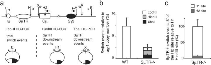 S μ TR − / − mice have increased levels of CSR events targeted to downstream sequences. (a) DC-PCR measuring CSR junction sites downstream of the SμTR region. HindIII and XbaI sites downstream of the SμTR region were used in DC-PCR assays to measure CSR junctions in sequences downstream of each site. Total CSR sites were determined by EcoRI DC-PCR (E, EcoRI; H1 and H2, HindIII; X, XbaI). Primer pairs used for the different DC-PCR assays are indicated by small arrows of different types. (b) Wild-type and SμTR −/− CSR events measured by EcoRI, HindIII, and XbaI real-time DC-PCR. Copy numbers for CSR events were derived from pSμ/Sγ3 standard curves. Rag-1 PCR normalized CSR events relative to Rag-1 copy number. Mean values and SEM are from seven independent experiments with four mice per group. (c) Percentage of SμTR −/− switch events downstream of the H2 relative to events downstream of H1 (set to 100%). Mean values and SEM are from three independent experiments per group.