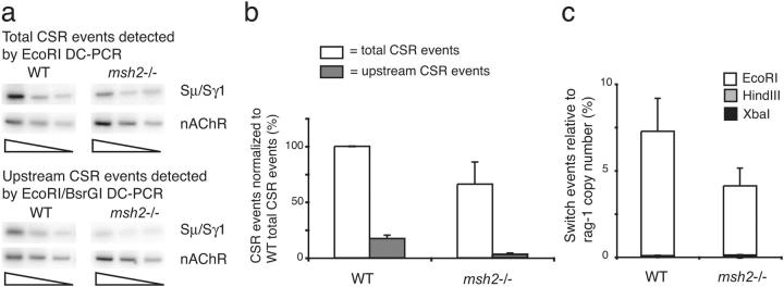 CSR within sequences upstream of the S μ TR are reduced in Msh2 − / − mice. (a) Twofold dilutions of genomic DNAs were assayed by Sμ/Sγ1 EcoRI DC-PCR and EcoRI–BsrGI DC-PCR. Samples were normalized using nAChR DC-PCR. (b) CSR sites in wild-type or Msh2 −/− mice measured relative to total wild-type CSR (set to 100%). Mean values and SEM of at least four independent experiments are presented. (c) CSR events in Msh2 −/− mice measured by EcoRI, HindIII, and XbaI real-time DC-PCR and compared with wild-type mice. Mean values and SEM are from six independent experiments with two Msh2 −/− mice and seven independent experiments with four wild-type mice.