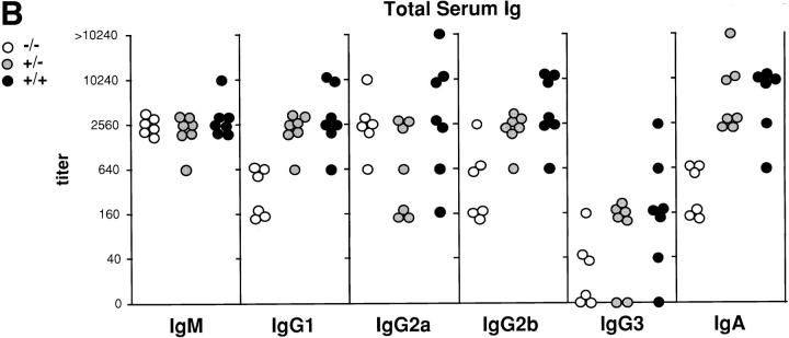 Reduction in the B/T cell ratio and reduced levels of total serum antibodies in p52 / p100 (−/−) mice. ( A ) Representative FCM analysis of splenocytes from 16-wk-old p52 / p100 (−/−) and (+/−) mice. <t>IgM–Red</t> 670 versus IgD-FITC two-color profiles are displayed in the top panels. Single-color profiles depict B220-PE and CD3-FITC staining on total splenocytes ( middle and bottom , respectively). Numbers reflect the percentage of positively stained spleen cells. ( B ) Reduced levels of <t>IgG1,</t> IgG2b, and IgA in sera of p52 / p100 (−/−) mice. Titers of total immunoglobulin isotypes from 7–10-wk-old mice of each genotype are shown as indicated. IgG1, IgG2a, and IgA titers differed significantly ( P