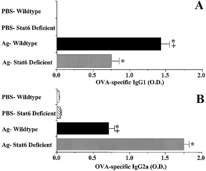 Effect of Stat6 deficiency on serum OVA-specific <t>IgG1</t> ( A ) and OVA-specific IgG2a ( B ) antibody levels of mice 3 d after a single antigen or PBS aspiration challenge. Mice were treated as described in Fig. 1 . Serum was diluted 1:100, 1: 250, and 1:500 with FBS for analysis of OVA-specific IgG1 and IgG2a antibody levels by ELISA. Since recombinant OVA-specific antibodies were not available to generate a standard curve, relative antibody levels are reported using OD readings obtained after background absorbance was subtracted. Reported OD values are from samples diluted 1:250, all of which were below the saturation point of the assay as demonstrated by comparison to OD values obtained from samples diluted 1:100. Values are reported as mean and SE ( n = 9). * P value