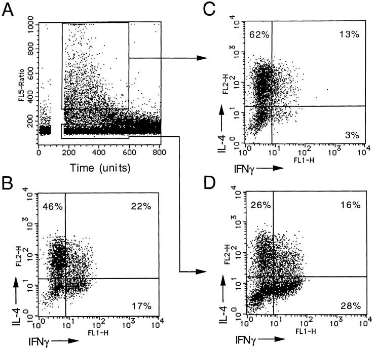 TARC-responsive cells are Th2. ( A ) A polyclonal Th2-polarized cell line was loaded with Indo-1 and challenged with 100 ng/ml TARC. Fluxing and nonfluxing cells were sorted over a 1-min period. Unsorted ( B ), and sorted fluxing ( C ) and nonfluxing ( D ) T cells were stimulated with PMA + ionomycin for 4 h and IFN-γ and <t>IL-4</t> were measured by intracellular staining.