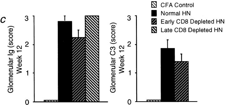 CD8 + T cell depletion in HN prevented proteinuria in the presence of elevated serum anti-Fx1A Ab levels and glomerular IgG deposition. (a ) Proteinuria in early or late CD8-depleted HN was not significantly greater than that in CFA controls. In normal HN and ATx/HN, proteinuria was detected from 8 wk, and was not different between these groups at 8 and 12 wk. Proteinuria was significantly greater in normal HN and ATx/HN than in early or late CD8-depleted HN, or CFA controls, at 8 ( P
