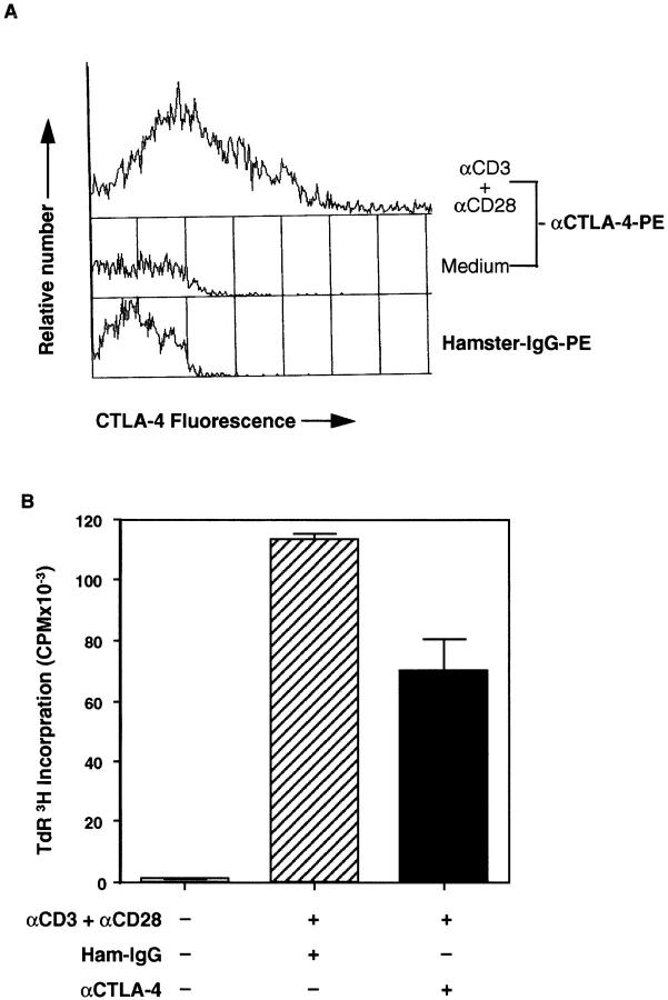 Defect of CTLA-4–induced suppression of CD4 + T cell proliferation in TGF-β1 −/− mice. Freshly purified CD4 + T cells from asymptomatic TGF-β1 −/− mice were stimulated with the modified antibody regimen as indicated. Anti-CD3: 0.5 μg/ml; anti-CD28: 0.2 μg/ml; anti– CTLA-4 and hamster IgG ( Ham-IgG ): 20 μg/ml. Goat anti–hamster IgG (20 μg/ml) was added to all wells. ( A ) Surface expression of CTLA-4 on treated and control TGF-β1 −/− CD4 + T cells by flow cytometry. Cells were harvested after 56 h of culture and stained with FITC–anti-CD4 and PE–anti-CTLA-4. CD4 + T cells were gated and CTLA-4 staining of treated ( top ) and control ( middle ) cells on FL-2 channels is displayed. Bottom , negative control antibody staining for PE-conjugated anti-CTLA-4. ( B ) T cell proliferation of treated and control TGF-β1 −/− T cells. Data are expressed as mean ± SD ( CPM ) of triplicate wells.