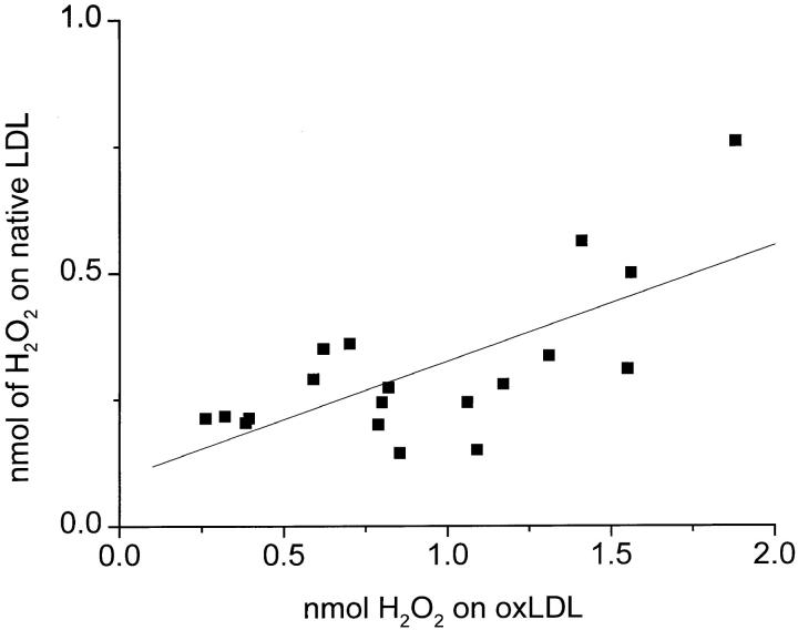 Variation in H 2 O 2 secretion of macrophages from different donors plated on surfaces coated with oxLDL versus native LDL. Macrophages (2 × 10 5 in KRBG-A), 3–7 d in culture, were plated and incubated for 2 h at 37°C in 96-well microtiter plates precoated with 10 μg of oxLDL or native LDL. Each point is the average nmoles H 2 O 2 secreted in 19 experiments done in triplicate. The correlation line was calculated using the Origin 4.10 linear regression program.