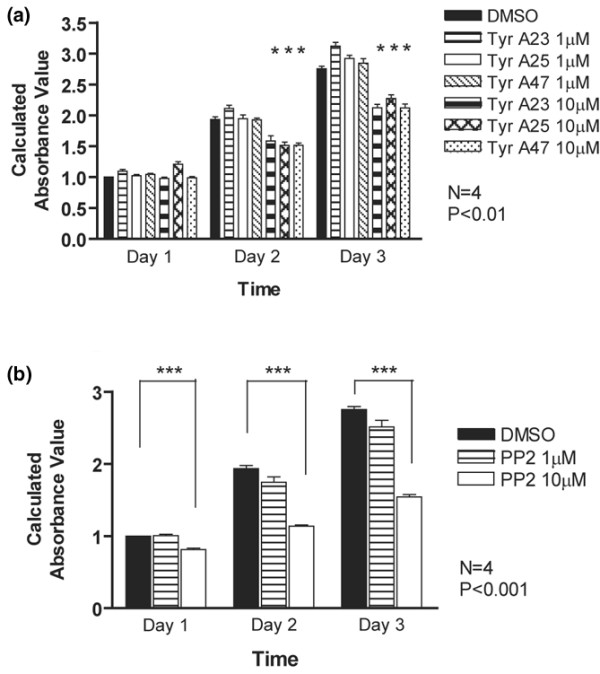 Src kinase activity regulates chondrocyte cell numbers. Primary mouse chondrocytes were incubated for 1 to 3 days with dimethyl sulphoxide (DMSO), (a) the general tyrosine kinase inhibitors Tyr A23, Tyr A25 and Tyr A47, or (b) the Src inhibitor PP2 (1 and 10 μmol/l each). Cell numbers were determined by MTT assay. All inhibitors reduced cell numbers at the 10 μmol/l concentration, but the effects of PP2 were more pronounced ( n = 4; * P