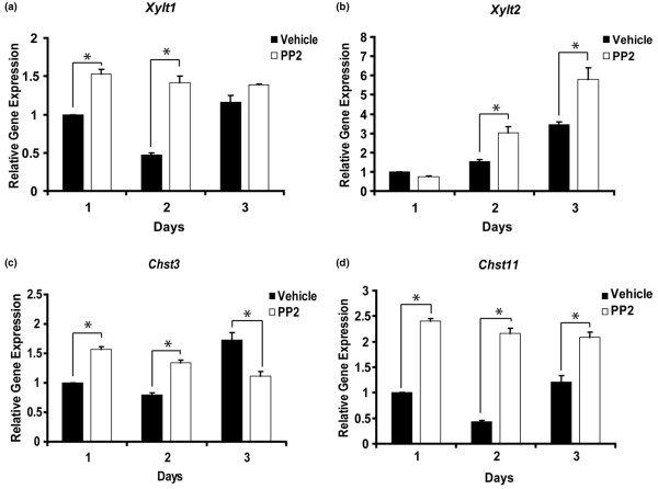PP2 promotes expression of genes involved in glycosaminoglycan synthesis. Primary mouse chondrocytes were incubated for 1 to 3 days with dimethyl sulphoxide or the Src inhibitor PP2 (10 μmol/l), and transcript levels of genes involved in glycosaminoglycan synthesis were determined by real-time PCR. Expression levels of (a) Xylt1 , (b) Xylt2 , (c) Chst3 and (d) Chst11 were significantly increased upon Src inhibition ( n = 3; * P