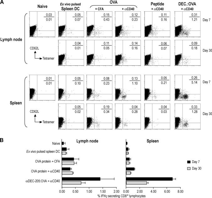 Enhanced efficacy of αDEC-205:OVA plus αCD40 relative to other immunization approaches. (A) C57BL/6 mice were immunized s.c. with several methods: Spleen DC pulsed ex vivo with 10 μg/ml each of αDEC-205:OVA and αCD40; 500 μg OVA in CFA; 50 μg OVA with 25 μg αCD40; 50 μg of SIINFEKL peptide with 25 μg αCD40; or 50 ng of OVA in αDEC-205:OVA with 25 μg of αCD40. 7 or 30 d later, lymph nodes were harvested and T cell expansion evaluated by K b -SIINFEKL–PE tetramer and CD62L staining. The gate for the y-axis was placed relative to the CD62L-negative tetramer binding cells in the right panel. Indicated percentages are percent of CD8 + lymphocytes. (B) As in A, but IFN-γ secretion evaluated by intracellular <t>cytokine</t> staining. Data are means of three experiments.