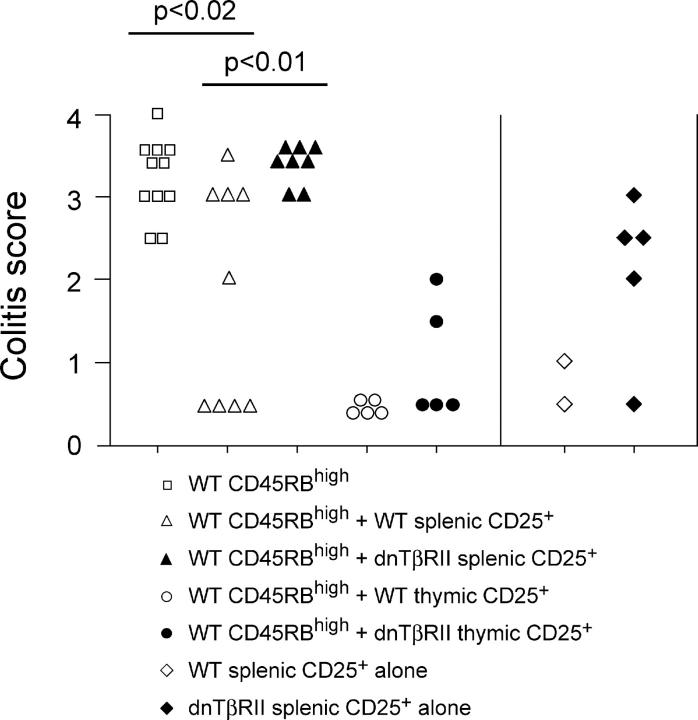 Suppression of colitis by thymic but not splenic dnTβRII CD4 + CD25 + cells. RAG-1 −/− mice received 2–4 × 10 5 CD4 + CD45RB high cells alone or in combination with 1.5–2 × 10 5 CD4 + CD25 + cells isolated from the spleen or thymus of either WT or dnTβRII Tg mice. In addition, some mice received splenic CD4 + CD25 + cells alone. Mice were killed 6–8 wk after transfer, and colons were taken for histological analysis. Data show colitis scores for individual mice taken from three independent experiments.