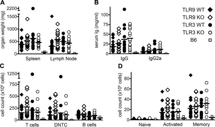 Lymphadenopathy, hypergammaglobulinemia, and lymphocyte accumulation in TLR-deficient mice. TLR9 +/+ ( n = 19), TLR9 −/− ( n = 16), TLR3 +/+ ( n = 15), and TLR3 −/− ( n = 17) mice were killed at 20 wk of age and assessed for evidence of aberrant immune activation; nonautoimmune C57BL/6 control mice ( n = 4) were killed at 26 wk of age. (A) Spleens and the two largest axillary lymph nodes were removed and weighed. (B) Total serum IgG and IgG2a were determined. (C) Splenocyte subsets were enumerated by FACS analysis for T cells (Thy1.2 + ), DNTC (CD4 − /CD8 − double-negative T cells), and B cells (CD22 + ). (D) Splenic CD4 + T cells were classified as either naive (CD44 − CD62L + ), activated (CD44 + CD62L + ), or memory (CD44 + CD62L − ) phenotype. The analysis in D was performed on 12 TLR3 +/+ and 12 TLR3 −/− mice. Horizontal lines represent mean values.