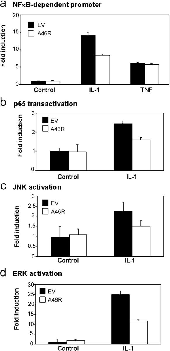 A46R inhibits multiple IL-1–dependent signals. HEK 293 cells were transfected with 100 ng A46R or pcDNA3.1 (EV) and the NF-κB (a), p65 (b), JNK (c), or ERK (d) reporter plasmids as described in Materials and methods. 6 h before harvesting, the cells were stimulated with either 100 ng/ml IL-1 or 100 ng/ml TNF as indicated, and luciferase reporter gene activity was measured.