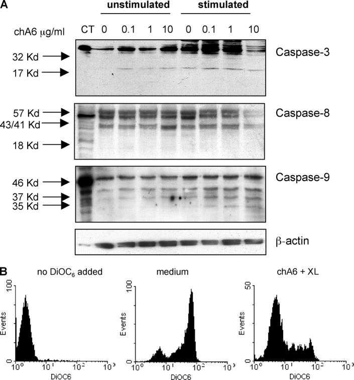 ChA6 mAb induce apoptosis in CD4 + T cells through the activation of the intrinsic pathway. (A) CD4 + T cells were incubated with the indicated concentrations of chA6 mAb. Cells were cultured overnight with or without coated anti-CD3 (0.1 μg/ml) and soluble anti-CD28 (1 μg/ml) mAbs. Western blot tests with anti-caspase-3, anti-caspase-8, and anti-caspase-9 mAb were performed. As positive control, Hela cells were treated with staurosporine, 5 μM. Amounts of loaded proteins have been controlled for homogeneity by probing membranes with an anti- β-actin mAb. Weak expression of the cleavage products of caspase-9 in CD4 + T cells cultured in medium is considered background apoptosis. Results from one representative donor out of three are shown. (B) CD4 + T cells were incubated with chA6 mAb (5 μg/ml) in the presence of 15 μg/ml of cross-linking goat anti–human IgG (F(ab′) 2 ). Mitochondrial-based death pathways were assessed using 3,3′-dihexyloxacarbocyanine iodide (DiOC 6 (3)) accumulation that reflects changes in Δψm in the mitochondria. Results from one representative donor out of three are shown.
