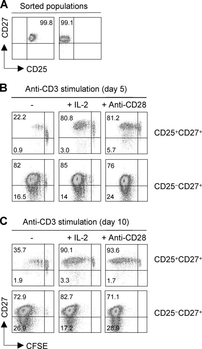 CD27 is stably expressed in proliferating regulatory T cells, whereas it is down-regulated on activated conventional T cells. (A) CD4 + CD25 + CD27 + regulatory T cells and CD4 + CD25 − CD27 + T cells (comprising naive and memory cells) were sorted from peripheral blood to > 99% purity. (B and C) Cells were labeled with CFSE and stimulated with plastic-bound CD3 antibodies in the absence or presence of IL-2 or CD28 antibodies. CD27 expression was measured as a function of cell division on days 5 (B) and 10 (C). One representative experiment out of three performed is shown.