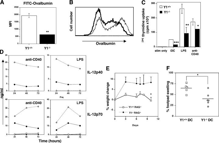 Impaired DC function in Y1 − / − mice. (A) OVA-FITC uptake by Y1 +/+ (white bar) and Y1 −/− (black bar) immature DCs. Flow cytometry was used to quantitated FITC-OVA uptake by DC, and results were plotted as mean fluorescence intensity (MFI). Four animals were analyzed per group. (B) Representative FACS plot showing OVA-FITC uptake by Y1 +/+ (thin line) and Y1 −/− (thick line) immature DCs. (C) Both Y1 −/− immature DCs (iDC) or DCs stimulated with LPS or anti-CD40 antibody as indicated (black bars) have impaired stimulatory functions in MLR compared with Y1 +/+ cells (white bars). Y1 +/+ T cells were used as responders. (D) IL-12p40 (top) and IL-12p70 (bottom) production by anti-CD40– (left) and LPS-stimulated (right) Y1 +/+ (white diamonds) and Y1 −/− (black circles) DCs measured by ELISA. The results are representative of two separate experiments. White and black squares represent control unstimulated Y1 +/+ and Y1 −/− cells, respectively. (E) Body weight of RAG1 −/− or RAG1 −/− × Y1 −/− mice days after transfer with Y1 −/− CD45RB hi CD4 + T cells as indicated. Four animals per group. (F) DTH response induced after injection of Y1 +/+ mice with mBSA-pulsed Y1 +/+ (white squares) or Y1 −/− (white diamonds) DCs. p-values as in Fig. 1 .