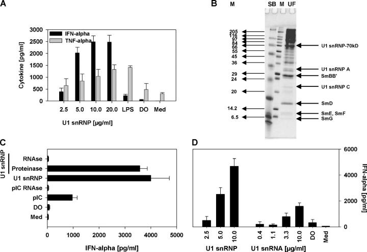 U1 snRNP induces type I IFN production. (A) Human PBMCs were stimulated with U1 snRNP (concentration given for total RNA plus protein) complexed to DOTAP (DO), 100 ng/ml LPS, or DOTAP alone, and cytokines were measured. Med, medium control. (B) SDS page of U1 snRNP, 4% stacking, 13.5% separation gel under reducing conditions, and Coomassie blue staining. Lane UF, RNP/Sm antigen, 8.8 μg protein; lane M, SigmaMarker, wide molecular weight range. (C) PBMCs were cultured with 20 μg/ml snRNP, 10 μg/ml poly rI:rC (pIC), snRNP, or poly rI:rC pretreated with RNase A or snRNP pretreated with proteinase K complexed to DOTAP. (D) PBMCs were stimulated with U1 snRNP or U1 snRNA complexed to DOTAP or DOTAP alone. The stimulatory properties of U1 snRNP or snRNA required the presence of an uptake enhancer (not depicted). All experiments show mean ± SEM of one representative out of two or more experiments, each with at least three to six donors.