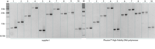 Comparison of PCR products amplified with two different DNA polymerase systems . A total of 100 ORFs (50 ORFs per enzyme mix), ranging from 300 to 4,000 bp in size, were amplified. Electrophoretic analysis of 10 representative ORFs amplified using either the supplier I (left panel) or the Phusion™ High-Fidelity DNA Polymerase (Finnzymes) (right panel). One-tenth of each reaction product of first and second step ORF amplification were loaded adjacent to each other on an analytical agarose gel. According to the lane number the expected ORF sizes and accession numbers of first-step PCR templates are as follows: 1: 759 bp, BC100921; 2: 1125 bp, BC093648; 3: 1554 bp, BC104948; 4: 3198 bp, BC117368; 5: 651 bp, BC105131; 6: 1653 bp, BC109061; 7: 2400 bp, BC113416; 8: 1737 bp, BC117320; 9: 1854 bp, BC101755; 10: 720 bp, BC113739.'M' indicates the molecular weight marker lanes.