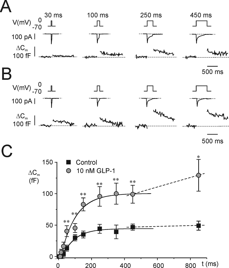 <t>GLP-1</t> potentiates exocytosis in B-cells. Increases in cell capacitance (ΔC m , bottom trace) elicited by progressively longer (5, 10, 15, 30, 50, 100, 150, 250, 350, 450, and 850 ms) depolarizations from −70 to 0 mV (V, top trace) under (A) control conditions and (B) 4 min after the inclusion of 10 nM GLP-1 in the extracellular medium. The interval between two successive depolarizations was 15 s for pulses ≤50 ms and 30 s for longer pulses. For clarity, only responses to the 30-, 100-, 250-, and 450-ms depolarizations are shown. The recording was performed using the perforated patch configuration. (C) Relationship between pulse duration ( t ) and increase in cell capacitance (ΔC m ) under control conditions and in the presence of 10 nM GLP-1 as indicated. The curves were derived by fitting Eq. 3 to the data points for depolarizations ≤350 ms. The dotted lines represent linear fits to the values measured in response to the two longest depolarizations. Data are mean values ± SEM of seven paired experiments. *P
