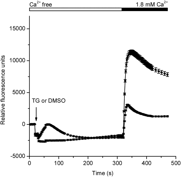 <t>Thapsigargin-dependent</t> Ca 2+ entry in S2 cells. Fluo-4 fluorescence changes were monitored using a FLIPR 384 . After 20 s of recording, the 384-well pipette-tip head was lowered into the solution creating an offset artifact in the recording. This offset artifact is unrelated to a cellular response and is dependent on the fluid volume in each well at the start of the experiment and the extent of tip penetration into the solution. 10 s after lowering the pipette-tip head, either thapsigargin (TG, 1 μM final, circles) or DMSO (triangles) was injected (arrow). CaCl 2 was then added to achieve a final concentration of 1.8 mM. Traces were zeroed at time 0, and each data point represents the mean (±SEM) of 192 replicates.