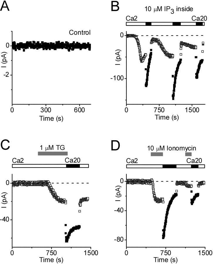 Activation of Ca 2+ current by store depletion. Pipette solution 11 (Ca 2+ buffered to 310 nM). (A) Control currents with no activation of Ca 2+ current (note current scale). (B) IP 3 -activated Ca 2+ currents (10 μM IP 3 added to pipette), during exposure to 2 (□) or 20 (▪) mM Ca 2+ . Note complex changes in current during exposure to varying external Ca 2+ . (C) Thapsigargin (TG, 1 μM) applied externally at indicated time (gray bars), during exposure to 2 (□) or 20 (▪) mM Ca 2+ . (D) Ionomycin (10 μM) applied externally at indicated times (gray bars), during exposure to 2 (□) or 20 (▪) mM Ca 2+ .