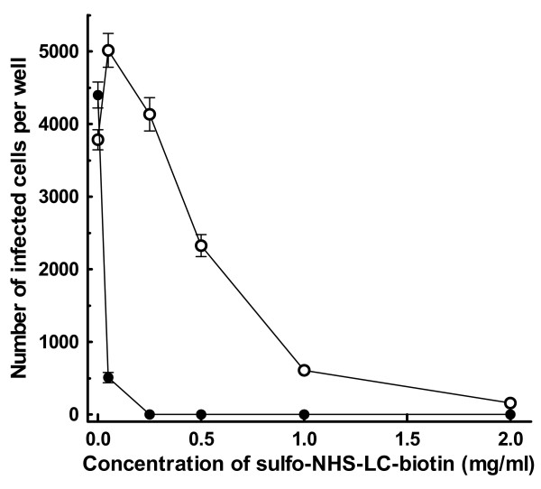 Infectivity analysis of AAV2 treated with sulfo-NHS-LC-biotin . AAV2.CMV-LacZ was treated with varying concentrations of sulfo-NHS-LC-biotin at room temperature for 45 min in the dark, followed by the addition of excess glycine to terminate the biotinylation reaction. The resulting biotinylated AAV2 preparations were applied to HeLa cells (5 × 10 6 AAV2 particles per well), which had been grown in 24-well plates at 37°C for 24 hr (initial cell number, 5 × 10 4 cells per well), and incubated at 37°C for 48 hr. Cells were fixed with glutaraldehyde, stained for β-galactosidase (LacZ) activity using X-gal as the substrate. Then, the number of infected cells, which were stained blue, in each well was counted under a light microscope (-○-). The same analysis was also performed on biotinylated AAV2 preparations, to which excess Neutralite avidin (100 μg per 5 × 10 6 AAV2 particles) had been added (-●-). Each datum shown is the average number of infected cells per well with a standard deviation (n = 26).