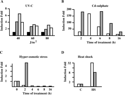 Quantitative RT-PCR analysis of hsp70.1 mRNA level in HeLa cells subjected to different stress treatments. ( A ) Total RNA (1 µg) from HeLa cells irradiated with UV-C at the indicated doses was reverse transcribed with oligo dT. An aliquot (1/10th) was tested in qPCR to assess the level of hsp70 A1A mRNA. Black bars: no recovery. Dark gray bars: 4 h of recovery. Light gray bars: 8 h of recovery. White bars: 15 h of recovery after irradiation. ( B ) HeLa cells were treated with 5 µM cadmium sulfate for 1 h and allowed to recover for the indicated times (white bars). Gray bars: cell treated for the indicated times with 5 µM cadmium sulfate. ( C ) HeLa cells were grown for the indicated time periods in 0.8 M sorbitol. White columns: hsp70.1. Gray columns: hsp70.2. ( D ) HeLa cells heat shocked 1 h at 42°C and the allowed to recover 1 h at 37°C (HS). White columns: hsp70.1. Gray columns: hsp70.2. C represents unstressed cells.