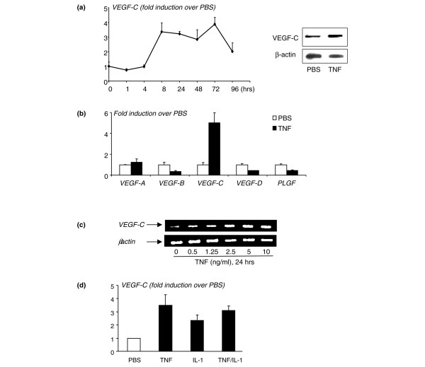 Tumor necrosis factor <t>(TNF)</t> increases expression of vascular endothelial growth factor-C (VEGF-C) by osteoclast precursors <t>(OCPs).</t> Wild-type (WT) spleen cells were cultured with macrophage colony-stimulating factor (M-CSF) for 3 days to enrich for OCPs. OCPs were cultured in 10% serum with M-CSF and treated with phosphate-buffered saline (PBS) or TNF (10 ng/mL). (a) Expression of VEGF-C and β-actin mRNA was measured by real-time reverse transcription-polymerase chain reaction (RT-PCR) at various times (left panel), and protein levels were measured by Western blot analysis (right panels). (b) Expression of VEGF-A , - B , - C , - D , and placental growth factor ( PLGF ) mRNA was examined in samples treated for 24 hours. The fold increases in TNF-treated over PBS-treated cells at a given time were calculated. Values are the means of triplicate loadings plus standard deviation. The effect of different doses of TNF (c) or a combination with interleukin 1 (IL-1) (TNF and IL-1 10 ng/mL) (d) on VEGF-C expression at 24 hours was examined by RT-PCR. Experiments were repeated twice with similar results.
