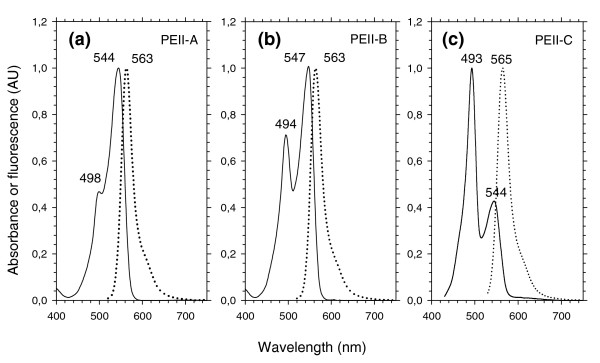 Absorption (continuous line) and fluorescence (dotted line) properties of the isolated PEII complexes. (a) PEII-A (as in Synechococcus sp. WH7803); (b) PEII-B (as in Synechococcus sp. RCC307); (c) PEII-C (as in Synechococcus spp. CC9605 and WH8102). Type IV chromatic adapters have a PEII-B under white or green light and a PEII-C under blue light [34].