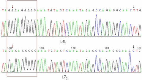 DNA sequencing of PPT region and partial U3 region of 3′ LTR in ALVE between line 6 3 and line 7 2 . Brown box shows the PPT region. Brown arrow shows one variation located on PPT region changed from G in line 6 3 to A in line 7 2 . Black arrow shows another variation located in U3 region of 3′ LTR changed from T in line 6 3 to C in line 7 2 . n = 11 for each line.