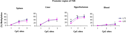 Results of quantitative DNA methylation analysis of inbred lines 6 3 and 7 2 in promoter region of TVB in spleen, liver, hypothalamus and blood. n = 5 for each line. ** P