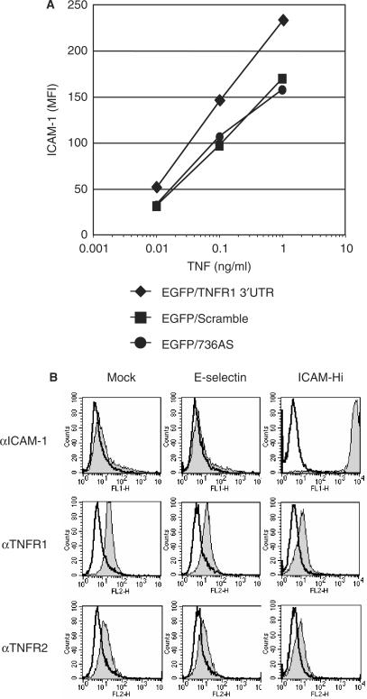 Complementarity between TNFR1 and ICAM-1 does not activate a natural antisense transcript (NAT) activity. ( A ) HUVEC cell lines expressing EGFP/TNFR1 3′UTR chimeric constructs were treated for 24 h with increasing concentrations of TNF to induce ICAM-1 expression. ICAM-1 expression levels were determined by FACS using an ICAM-1-specific antibody. ( B ) HDMEC cell lines overexpressing E-selectin and ICAM-1 were tested to determine basal TNFR1 cell surface levels. Cells were immunostained with fluorescently labeled antibody specific for ICAM-1, TNFR1 and TNFR2 then analyzed by FACS. Representative of one of two independent experiments with similar results.