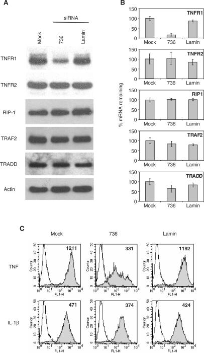 736 siRNA selectively targets TNFR1 mRNA and protein and selectively inhibits TNF responses. ( A ) HUVEC were mock-transfected or transfected with 736 or lamin siRNA. Cell lysates were prepared 24 h after the last transfection, resolved by SDS-PAGE, and immunoblotted with antibodies specific for TNF receptor signaling proteins. ( B ) HUVEC were transfected with 736 or lamin siRNA. cDNA from each culture was analyzed by qRT-PCR using TNF signalosome-specific primers. Values were normalized using actin controls and converted to '% mRNA Remaining' relative to mock expression levels. Representative of one of two experiments with similar results. ( C ) HUVEC were transfected with 736 or lamin siRNA. Cells were then stimulated for 24 h with either TNF (10 ng/ml) or IL-1β (50 ng/ml), immuno-stained using fluorescent antigen-specific antibody for ICAM-1 and analyzed by flow cytometry.