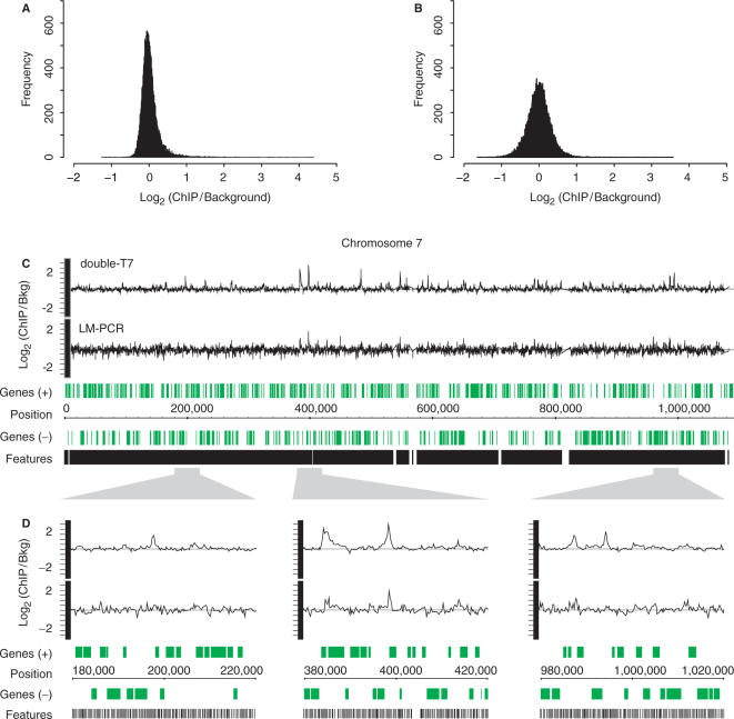 Double-round T7 amplification results in reduced technical variation compared to LM-PCR. Histograms of averaged binding ratios of four hybridizations with double-T7 ( A ) or LM-PCR amplified samples ( B ) across all DNA microarray probes. ( C ) Overview plot of chromosome 7 showing locations of array probes (black) and genes (green). Graphs of binding ratios of input versus ChIP show the background and binding signals for double-round T7 amplification (double-T7) (top) and LM-PCR (bottom). ( D ) Enlargement of indicated regions in (C).