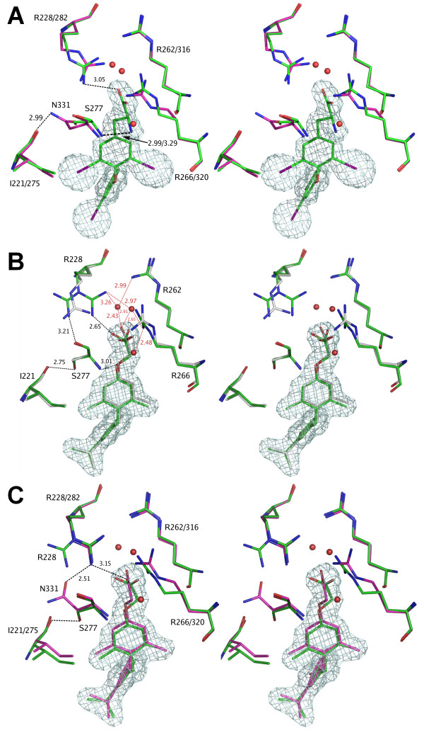 Bleicher3.png . Ligand-receptor interactions for thyroid receptors: (a) T 3 as bound to hTRα (green) and hTRβ (magenta). All interactions are maintained between the ligand and the binding site residues in both hTR isoforms. Both Ser277 and Asn331 interact with the amino group of T 3 through their amide nitrogen, leading to similar conformations of these residues. (b) GC1 bound to TRα: multiple conformations of the Arg228 are observed. In the productive conformation there is a strong interaction with the ligand (cyan), while in non-productive conformations this residue interacts with the side-chain of Ser277. The Arg228 double conformation is observed in the first crystal form of hTRα LBD+GC1 complex (Table 1). In the intermediate conformation Arg228 interacts both with the GC1 and the Ser277 amino group (white, second hTRα LBD+GC-1 crystal form, Table 1). (c) Comparison of GC1 bound to hTRα and hTRβ. For hTRβ (magenta) only a single productive conformation of the Arg282 side-chain was observed, which resembles the productive Arg228 (hTRα) conformation (green). Arg282 (hTRβ), is strongly interacting with the ligand and its productive conformation is locked in place by the interactions with the side-chain of Asn331.