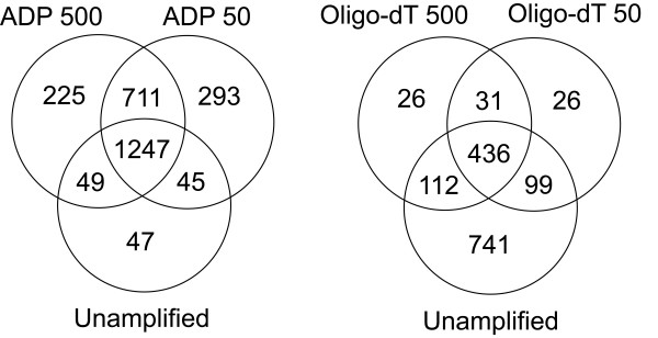 A comparison of the number of genes not detected by microarray analysis from unamplified RNA or from products generated by oligo-dT and ADP amplification methods using 500 or 50 ng starting total RNA. The number of genes below a 2 fold signal/background threshold in the RNA channel was compared between amplified and unamplified gene expression signatures as a measure of the potential transcriptome data lost during amplification.