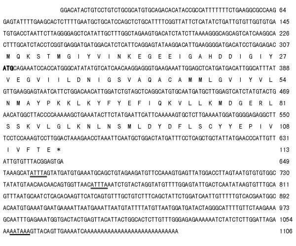 Nucleotide sequence and deduced amino acid sequence of K31 gene . The accession no. was AY885255 at <t>Genbank.</t> K31 cDNA was 1106 bp. Its ORF has 342 nucleotides, which codes 113 aa. The nucleotides (lower row) and deduced amino acids (upper row) are numbered at the right side of the sequences, respectively. Poly (A) signal (in the 3' UTR) is underlined. The start codon (ATG) is in bold and the stop codon (TAA) is indicated by an asterisk. An unstable motif (ATTTA) is doubly underlined.